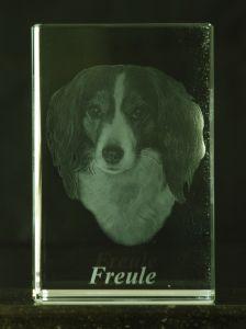 Freule my Kooikerhondje