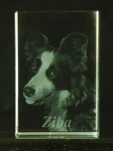 Ziba my Border-Collie